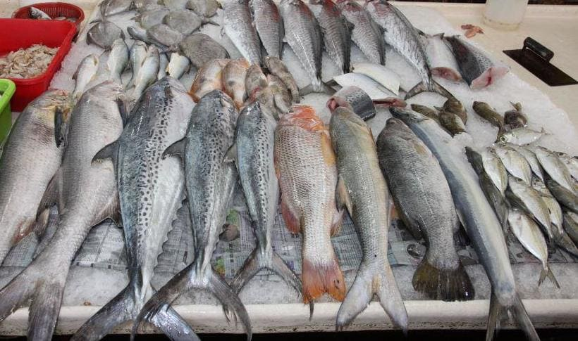 Сколько времени может храниться свежая рыба