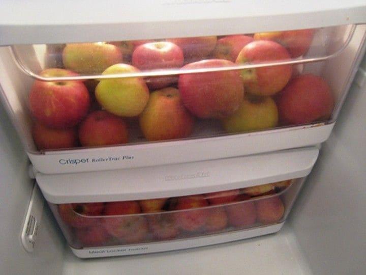 сроки хранения яблок в холодильнике