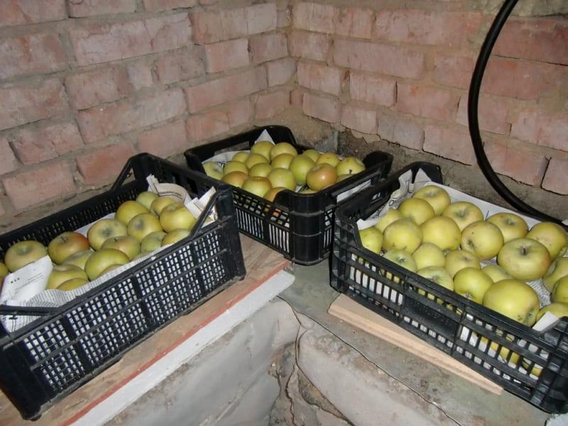 яблоки в погребе
