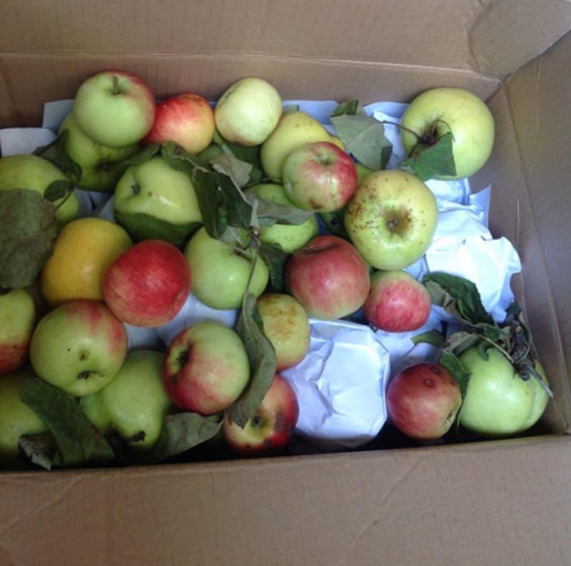 яблоки на балконе